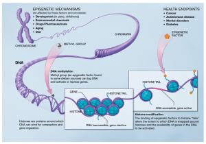 epigenetic mechanism