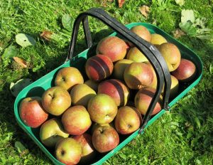 trug-apples